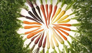 Carrots vegetables HD wallpaper