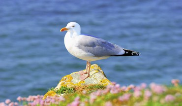 Nature animals seagulls birds HD wallpaper