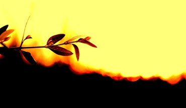 Nature leaves silhouette plants sunlight HD wallpaper