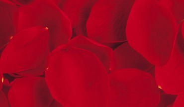 Red Rose Petals  HD wallpaper