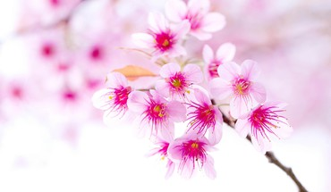 Flowers HD wallpaper