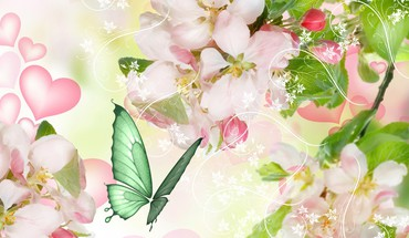 Apple blossoms for spring HD wallpaper