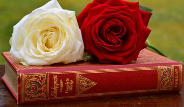 roses de Shakespeare  HD wallpaper