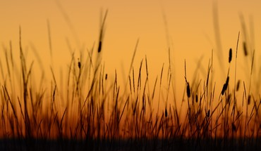 Sunset nature grass plants california HD wallpaper