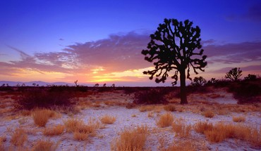 Sunset desert california mojave joshua tree HD wallpaper