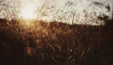 Bokeh fields grass summer sunset HD wallpaper