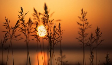 Sunset and dry herbs HD wallpaper