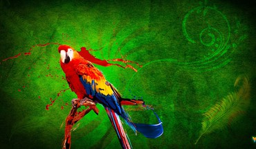 Birds digital art paintings parrots HD wallpaper