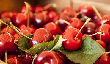 Cerises close-up fruits  HD wallpaper