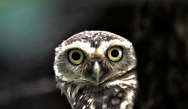Surprised owl HD wallpaper