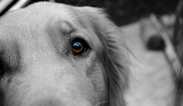 Animals brown eyes cameras closeup dogs HD wallpaper