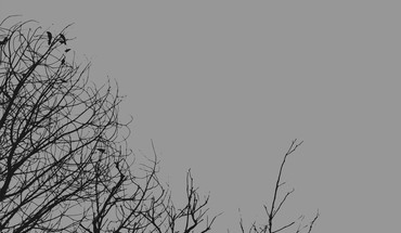 Gray minimalistic trees HD wallpaper