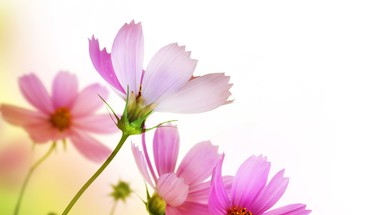 Delicate fresh flowers HD wallpaper