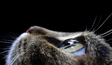 Close-up eyes cats faces HD wallpaper