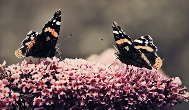Flowers animals insects butterflies HD wallpaper