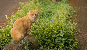Animaux chats plantes  HD wallpaper