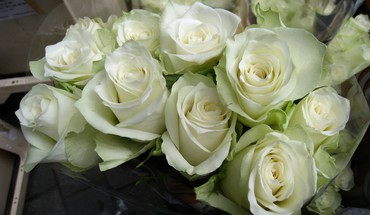White roses for sale HD wallpaper