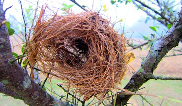 Birds nest  HD wallpaper
