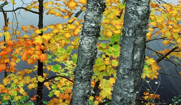 Trees autumn (season) ponds brook birch york HD wallpaper