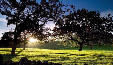 Sun flare sunlight trees HD wallpaper
