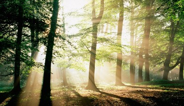 Forest morning mystical HD wallpaper