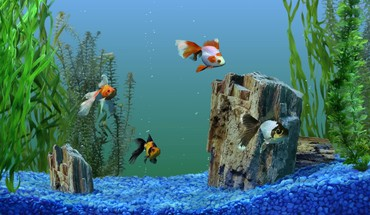 Aquarium photos de poissons HD wallpaper