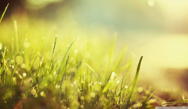 Green nature grass sunlight HD wallpaper