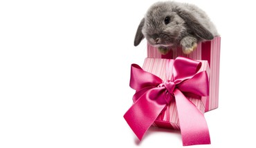 Animals bunnies presents HD wallpaper