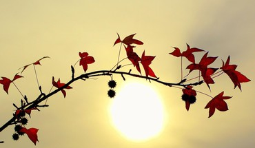 Branche leaves in the sun HD wallpaper