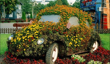Flowers cars HD wallpaper