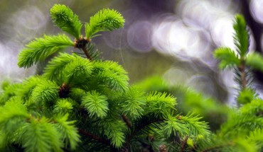 Green macro trees HD wallpaper