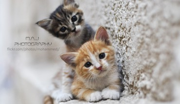 Cats by maj photography HD wallpaper