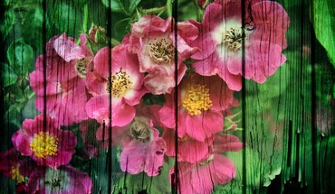 Grunge flowers HD wallpaper