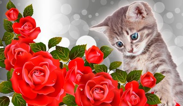 Kitty red roses HD wallpaper