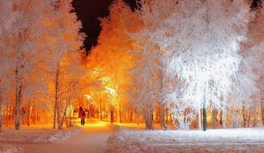Nature winter snow trees night lights HD wallpaper