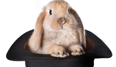Animals bunnies mammals top hat HD wallpaper