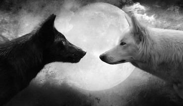 Black and white animals moon grayscale wolves HD wallpaper