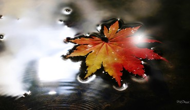 Sparkling fall leaf HD wallpaper