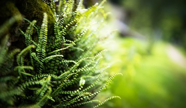 Green grass switzerland macro ferns HD wallpaper