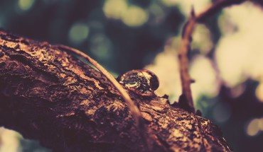 Drop vision branches focused HD wallpaper