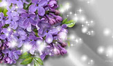 Fragrance of the lilacs HD wallpaper