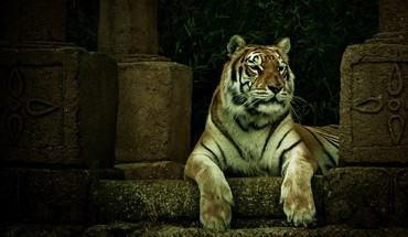 Animaux tigres bâtiments en pierre sculpture  HD wallpaper