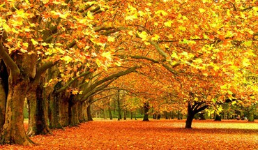 Autumn fall background HD wallpaper