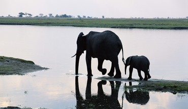 Animals elephants lakes baby HD wallpaper