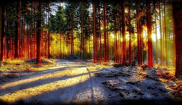 Forest sunlight HD wallpaper