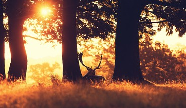 Animals deer evening horns landscapes HD wallpaper