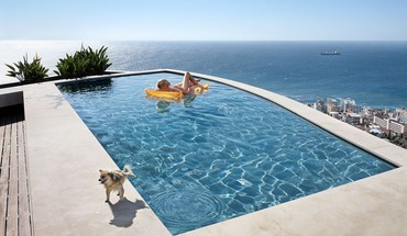 Dogs funny swimming pools HD wallpaper