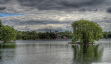Weeping willow hdr HD wallpaper