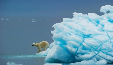 Polar bears HD wallpaper