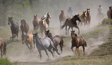 Hungary animals horses running HD wallpaper